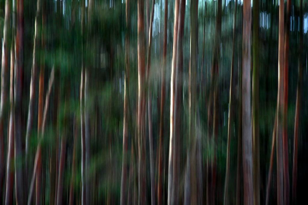 Vanja Tajnšek_Čarobni gozd2