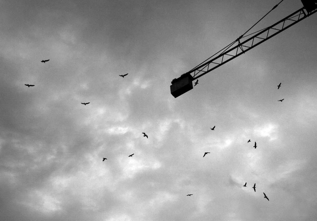 Andrej Potrč_Vultures