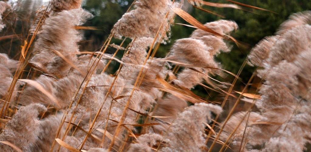 Vanja Tajnšek_Balerine v vetru