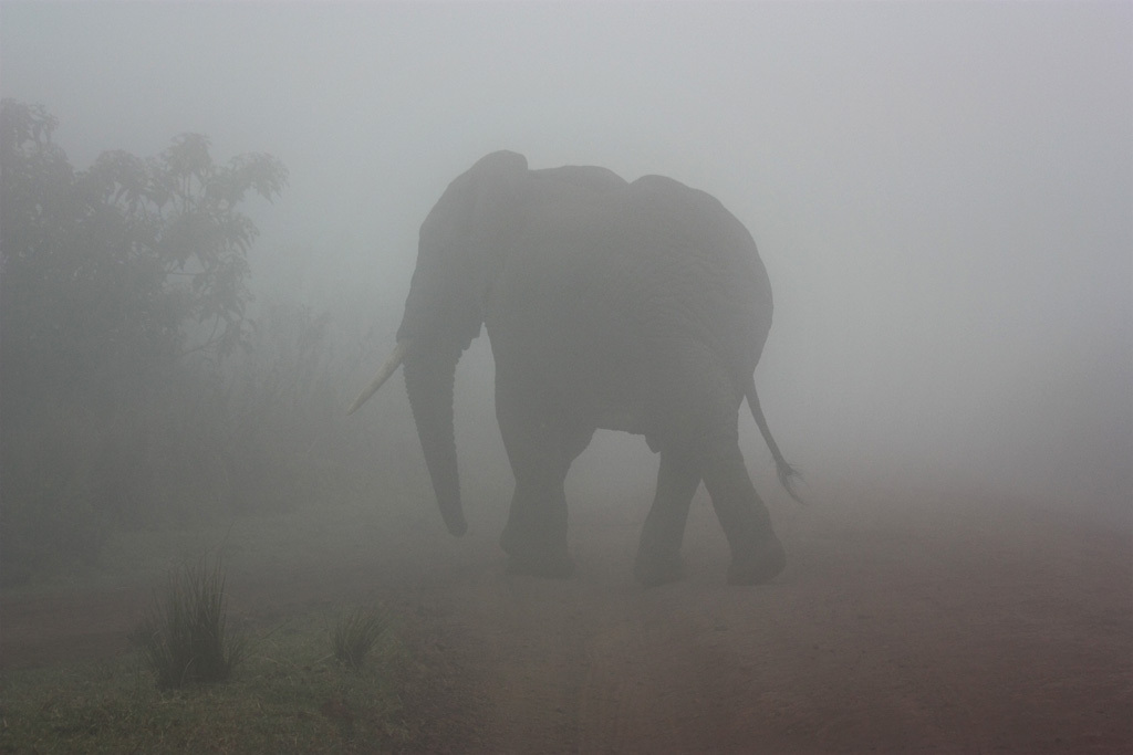 Lara Rojc_Megleni safari