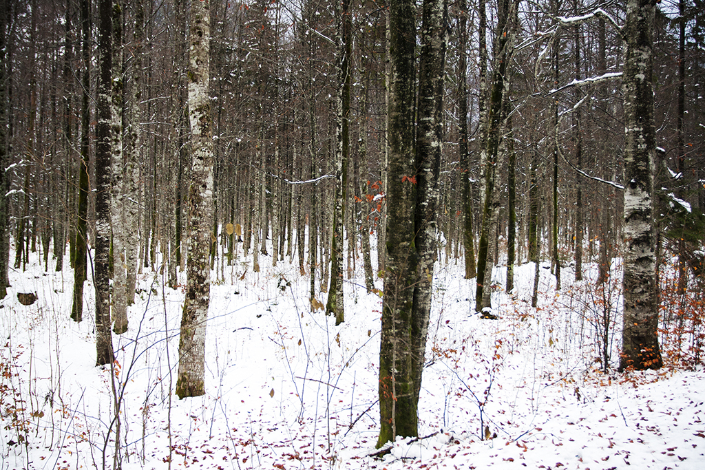 Andrej Potrč_Čarobni gozd