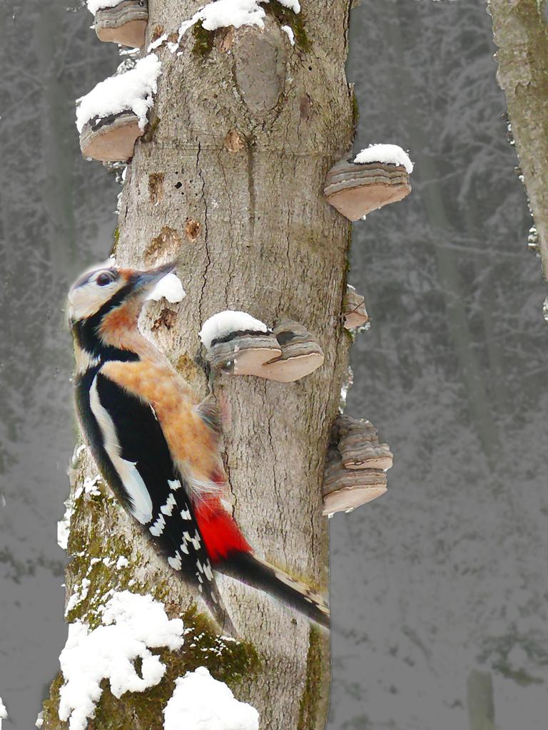 Pavel Kumer_Detel v snegu