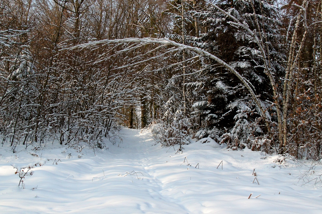 Blanka Podrekar_Zimska pravljica2