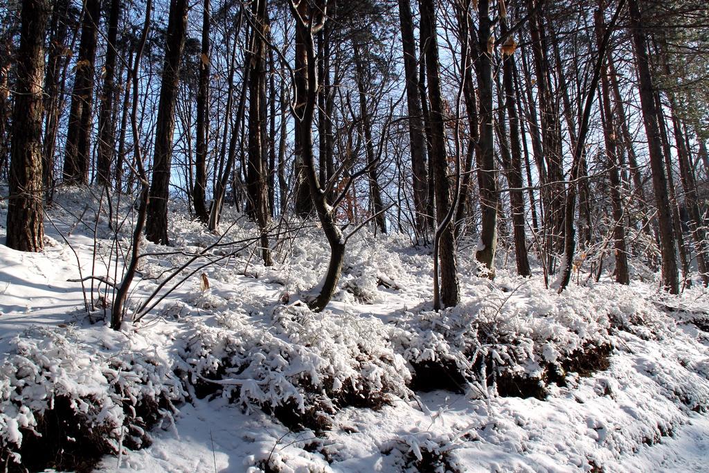 Blanka Podrekar_Zimska pravljica3