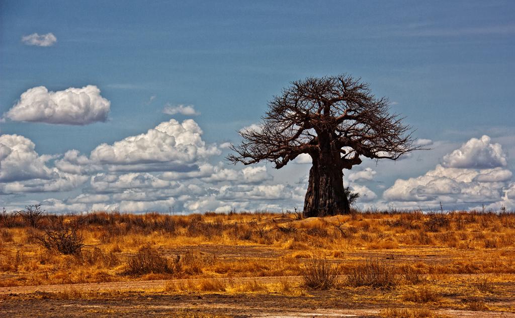 Lara Rojc_Baobab