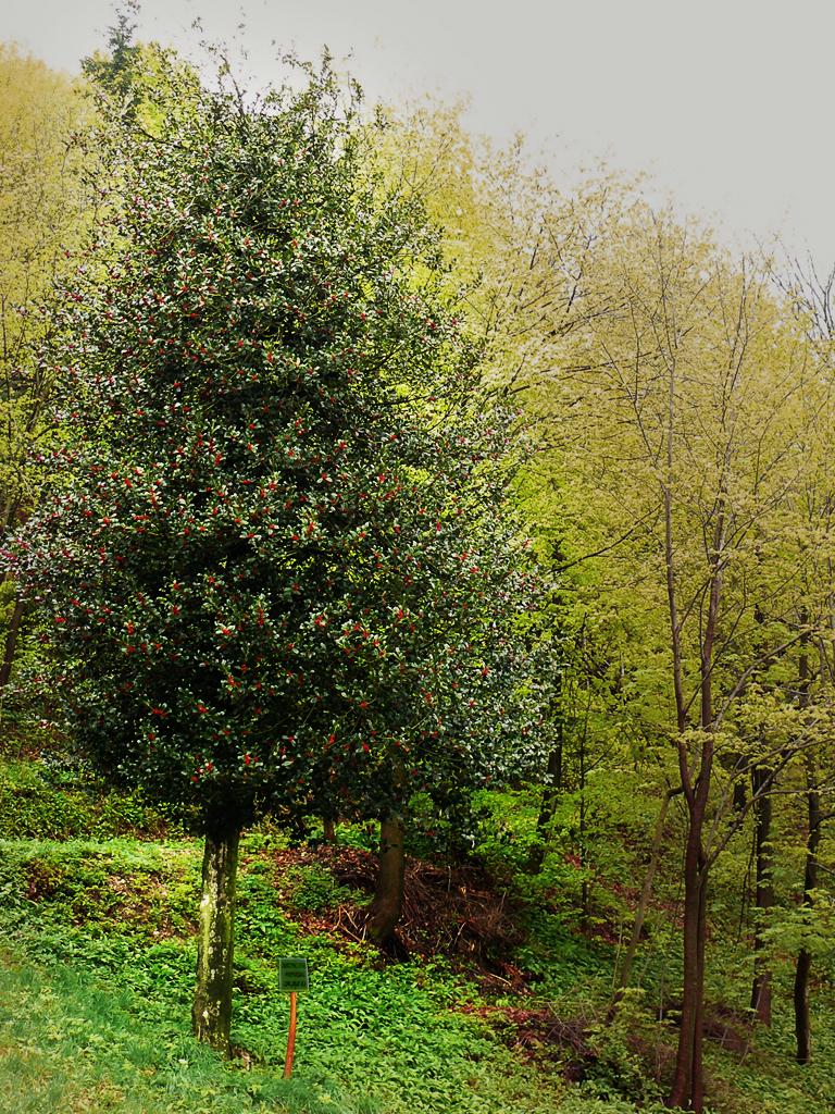 Pavel Kumer_Bodika - dekorativno drevo