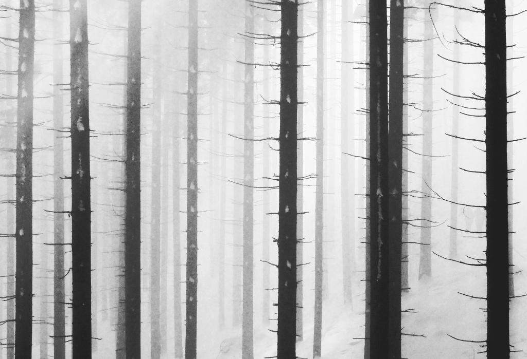Andreja Ravnak_Linear