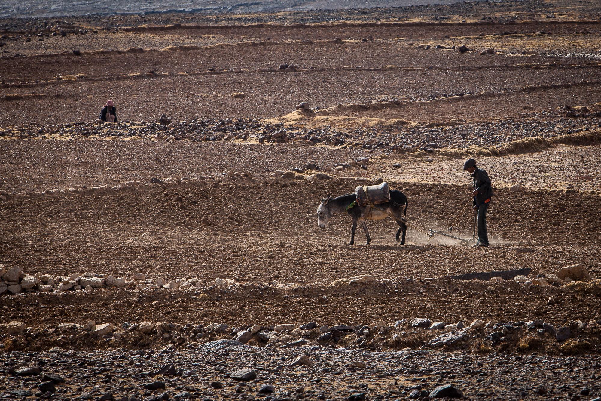 Tomaž Velechovsky_Donkey plowing