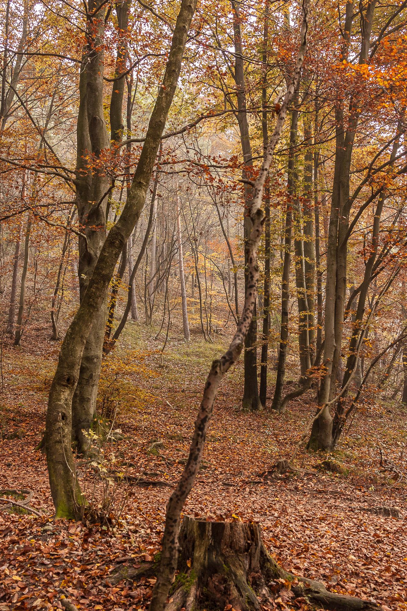 Tomaž Velechovsky_Jesenski gozd
