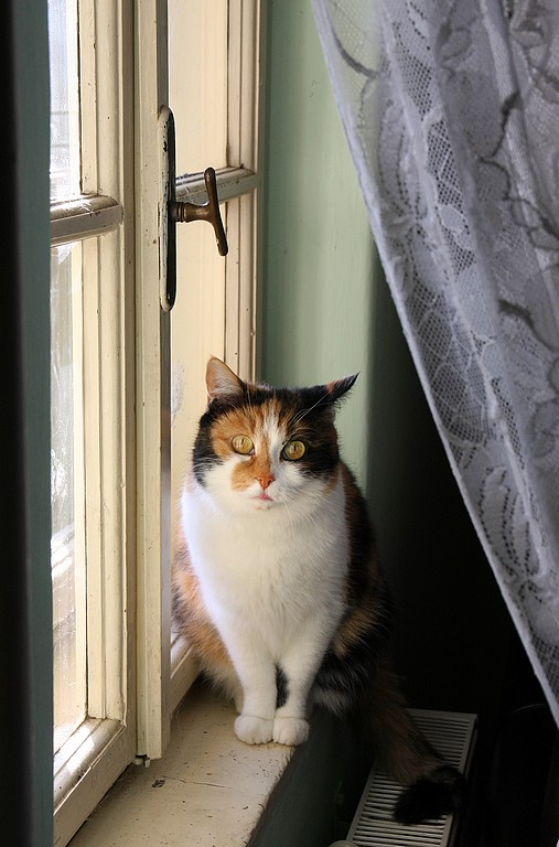 Vanja Tajnšek_Njeno okno
