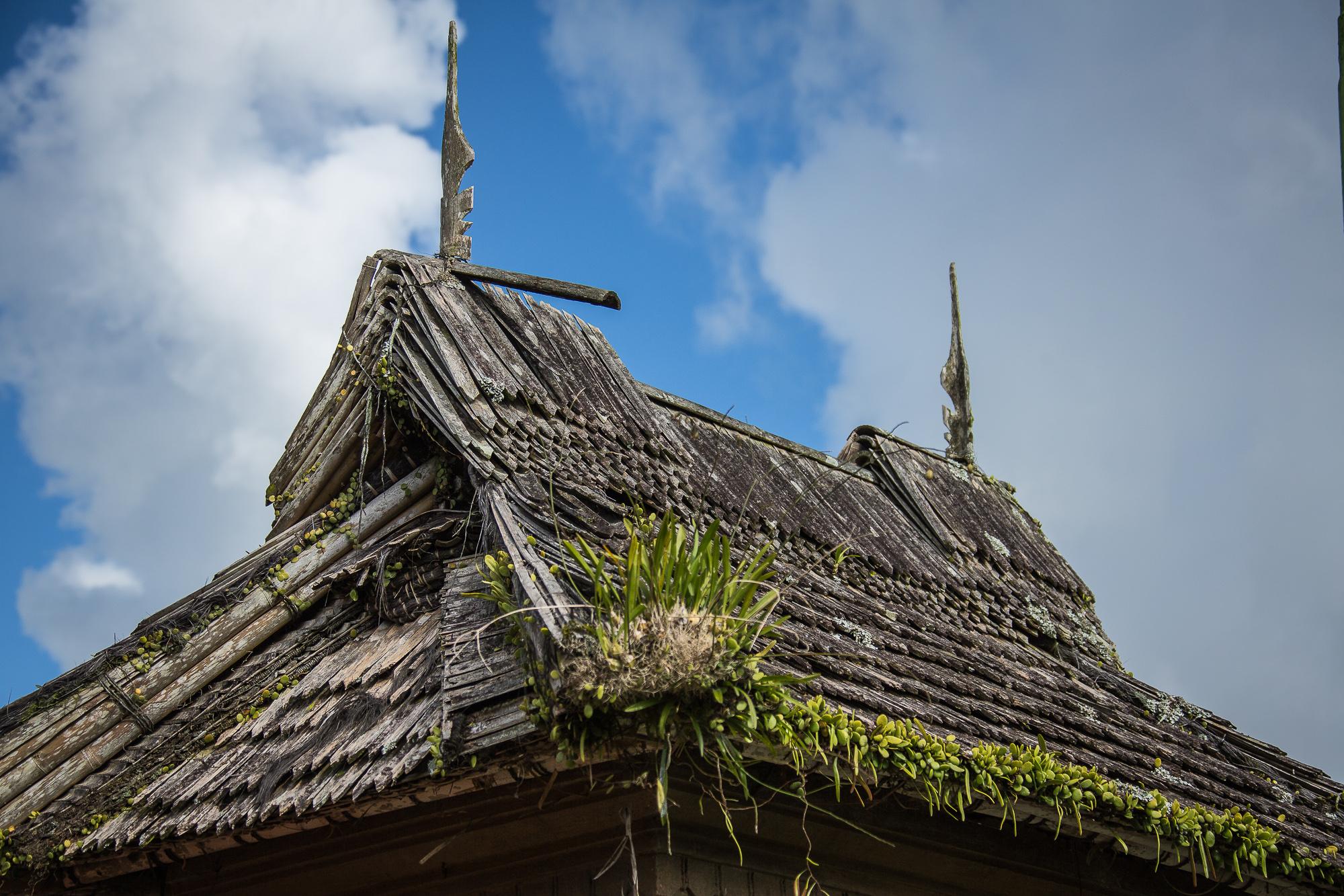 Tomaz Velechovsky_Ziva streha