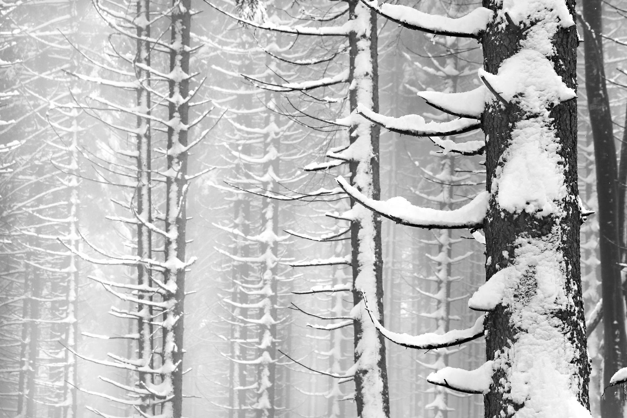 Andreja Ravnak_Vertikalscape