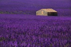 lavender dreams_mala