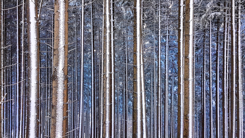 Andreja Ravnak: Blue forest
