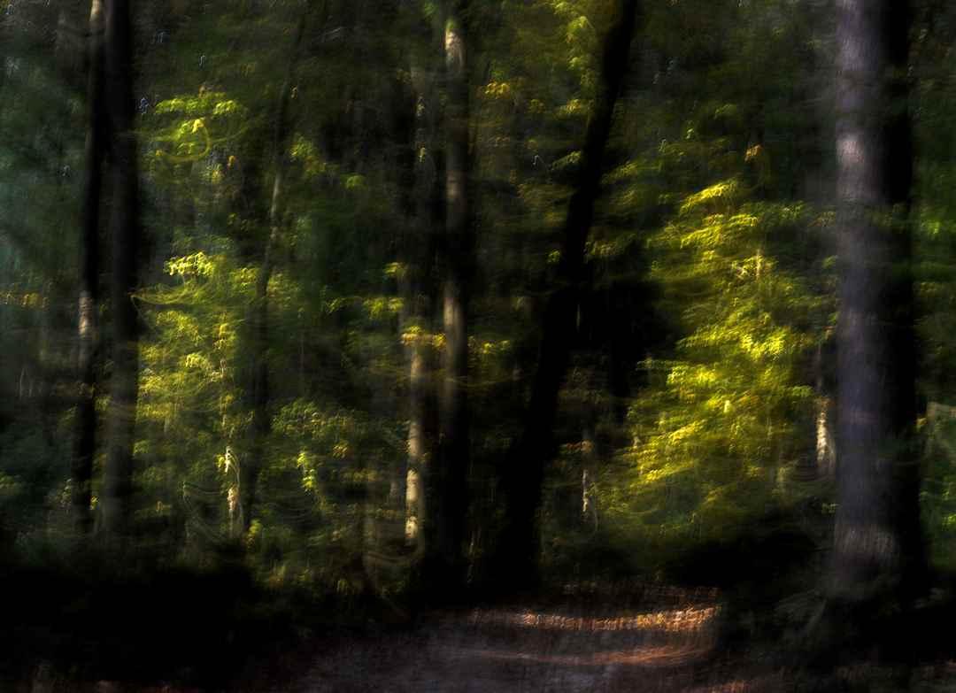 Lidija Polajžer: Čopič narave