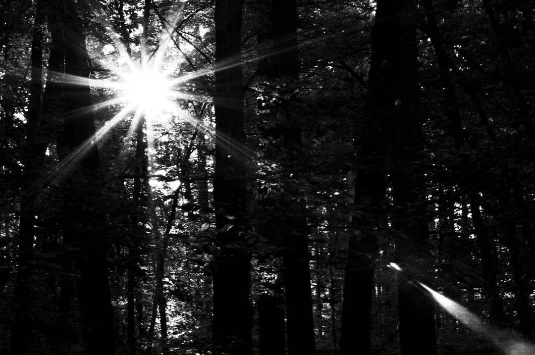 Lidija Polajžer: Dotik sonca