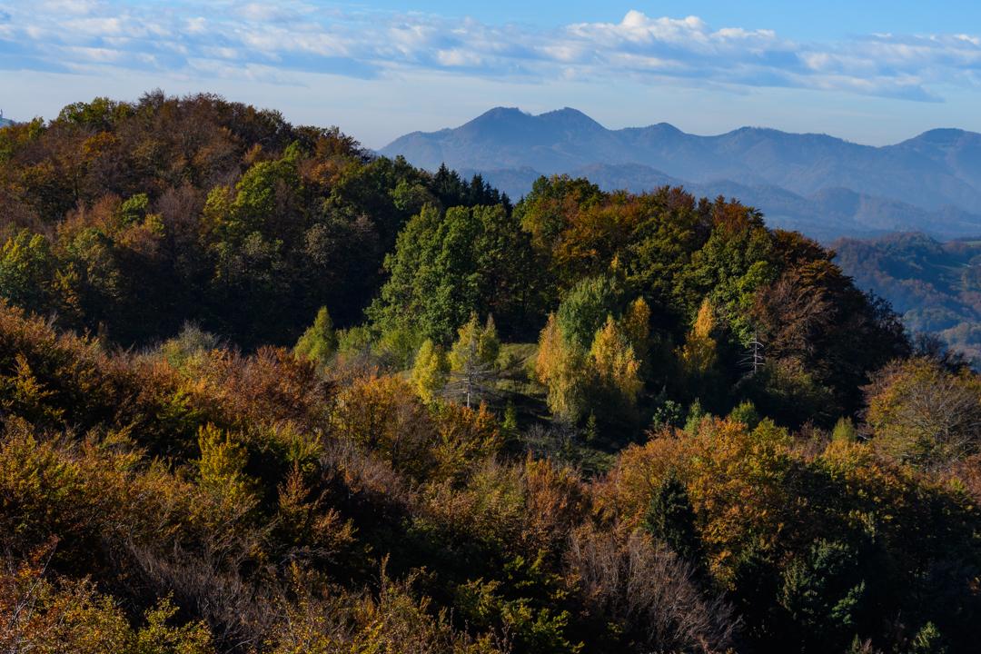 Vid Sajko: Gozd kot ga vidijo ptice