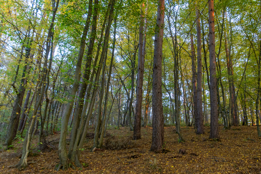 Vid Sajko: Jesen v gozdu
