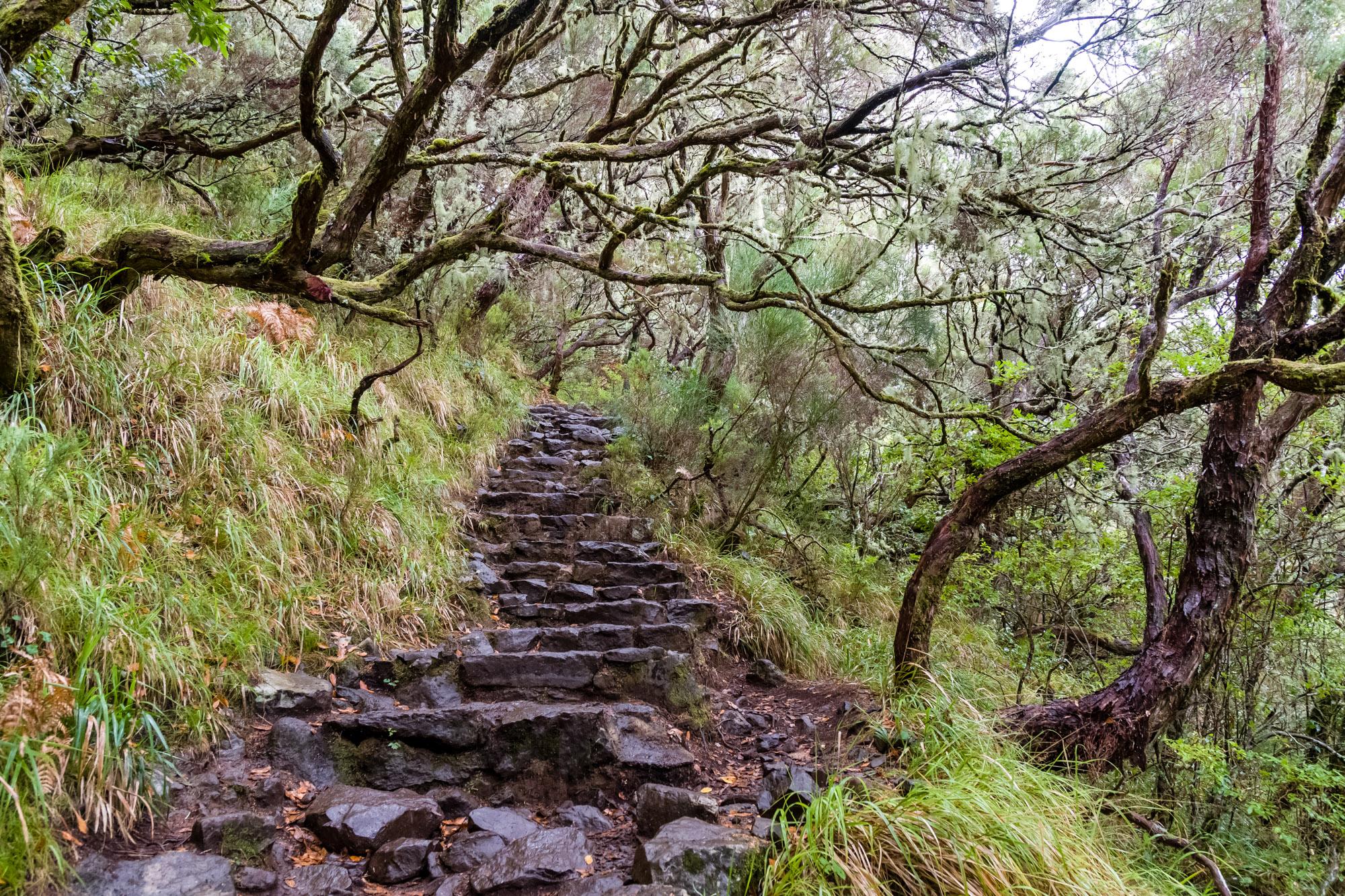 Peter Ocvirk: Madeira - Stopnice v gozdu