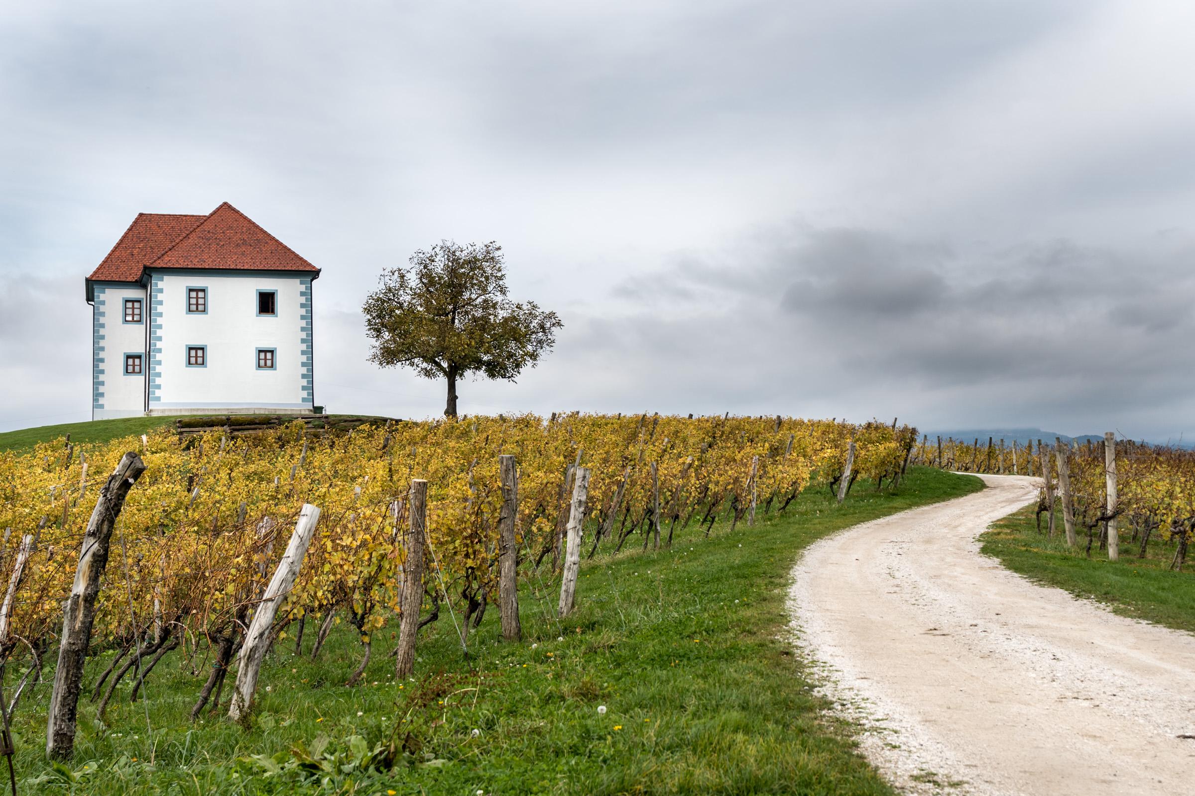 Peter Ocvirk: Jesen v vinogradu
