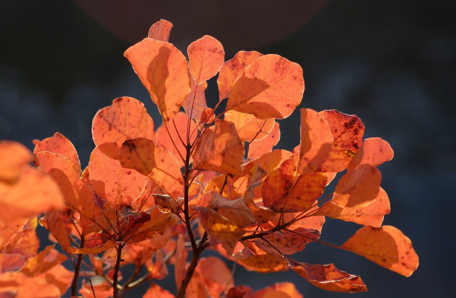 Andrej Repar: Žar jeseni