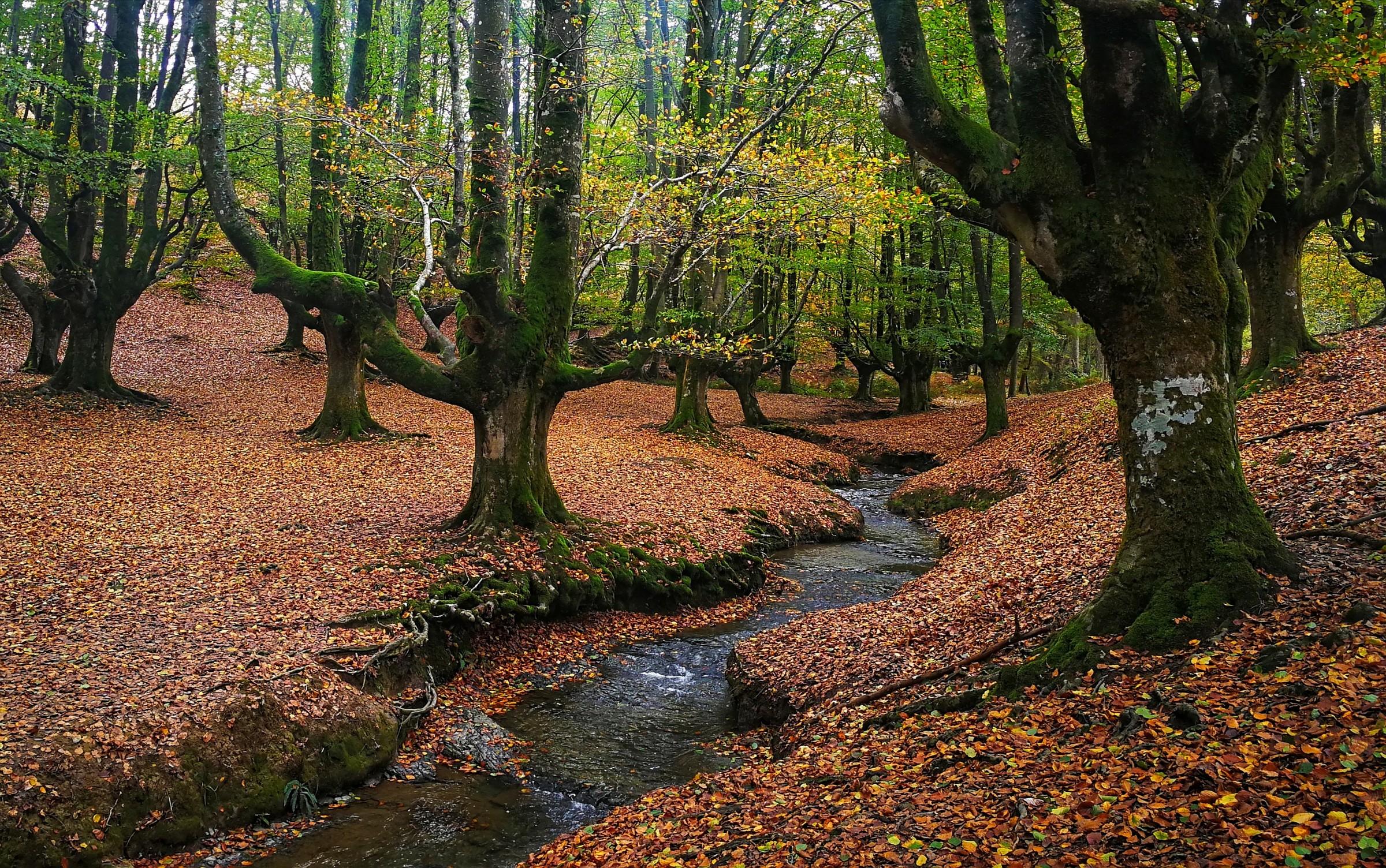 Vanja Tajnšek: Jesenski gozd
