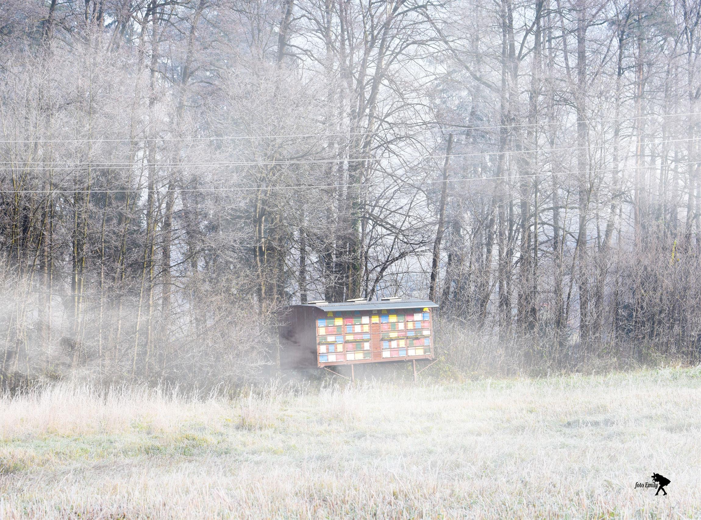 Emilija Bek Banfič: Prebujenje v megli