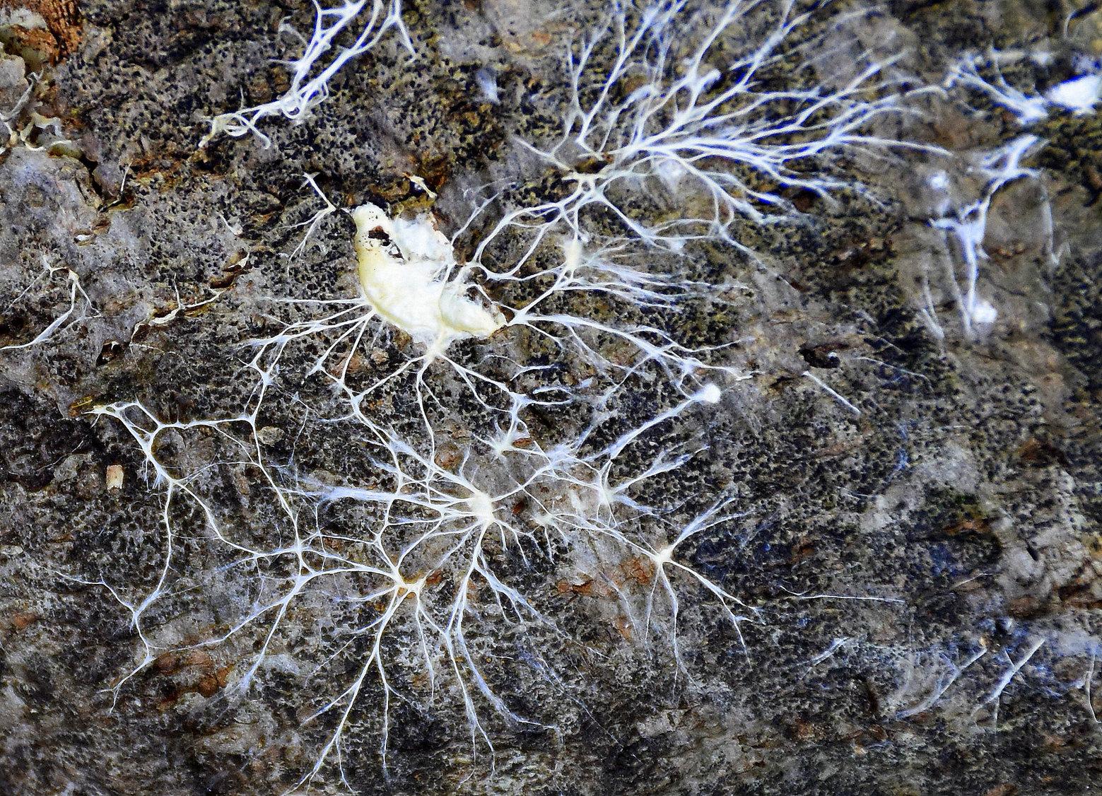 Cvetka Avguštin: Sinapse
