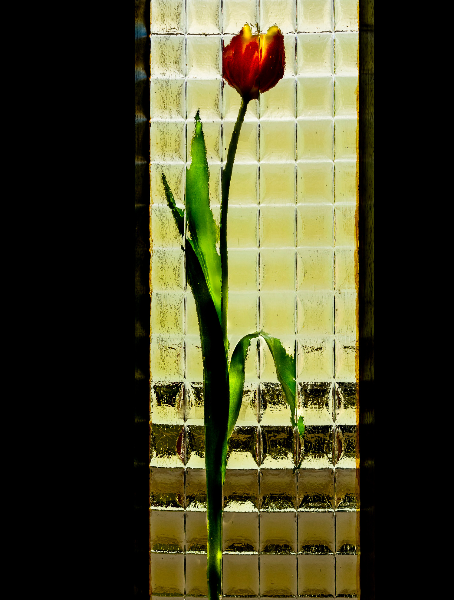 Igor Kastelic: Tulipan