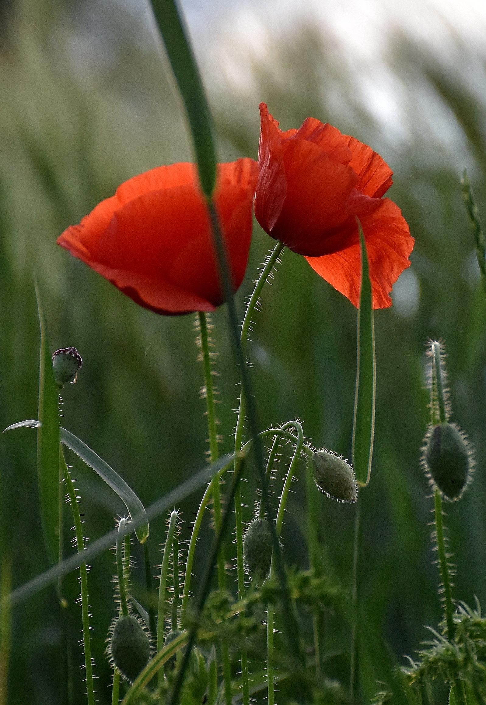 Cvetka Avguštin - V družbi