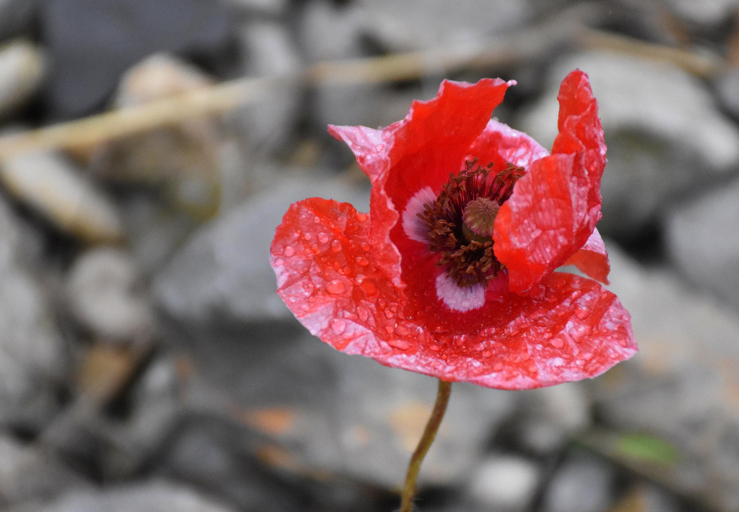 Cvetka Avguštin - Zakaj