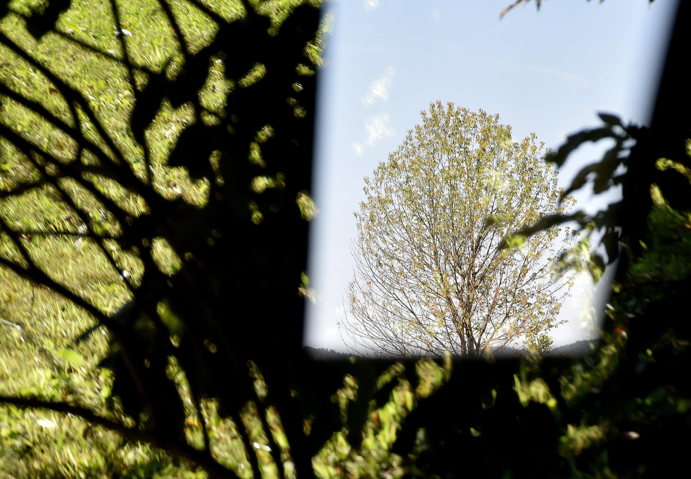 Cvetka Avguštin - Zeleno
