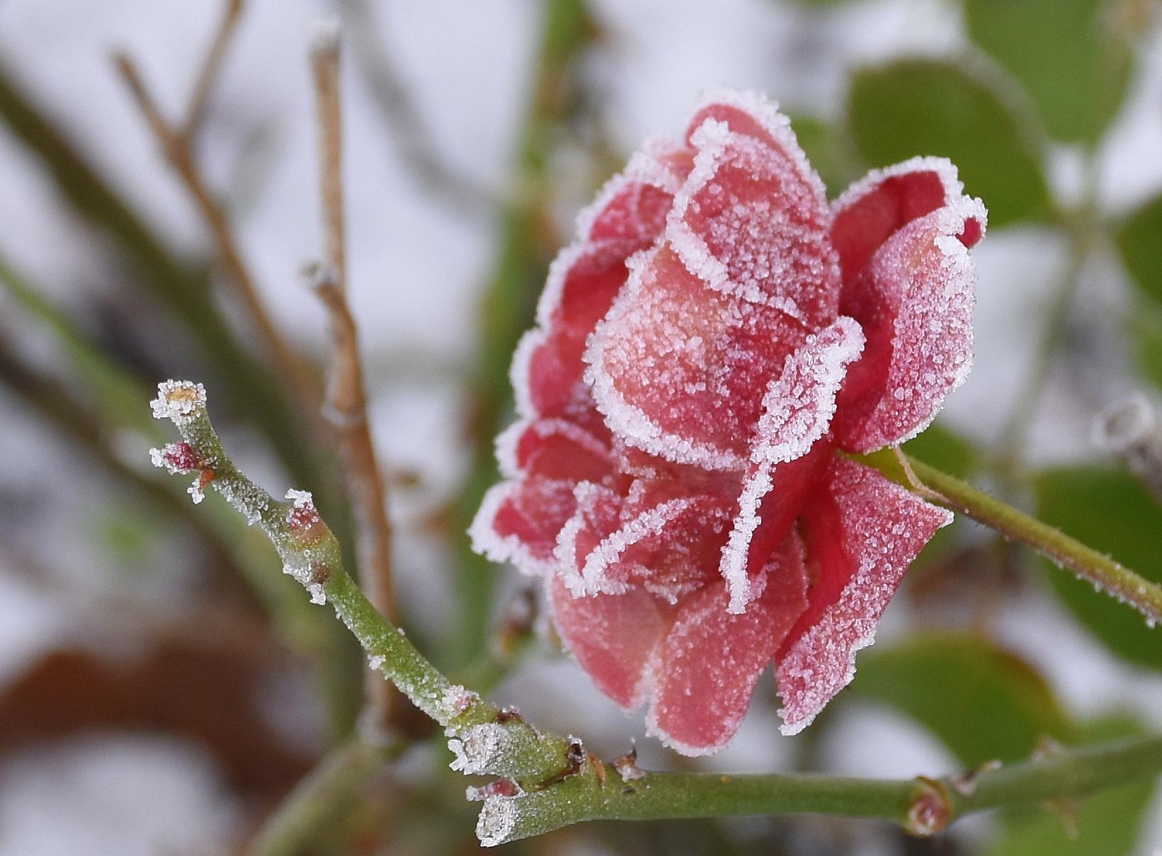 Cvetka Avguštin - Okovana lepotica