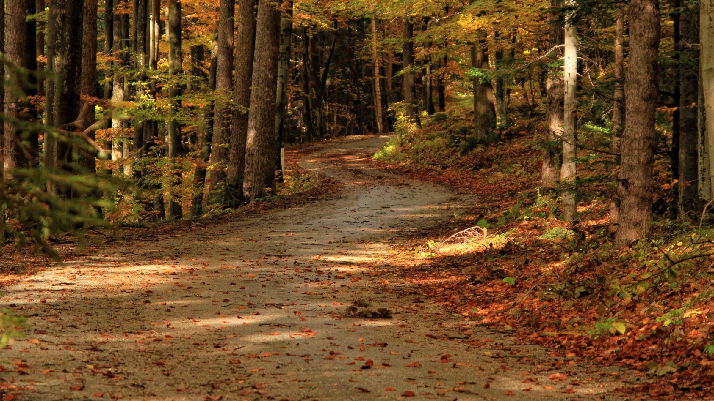 Mitja Korošec - Cesta skozi gozd