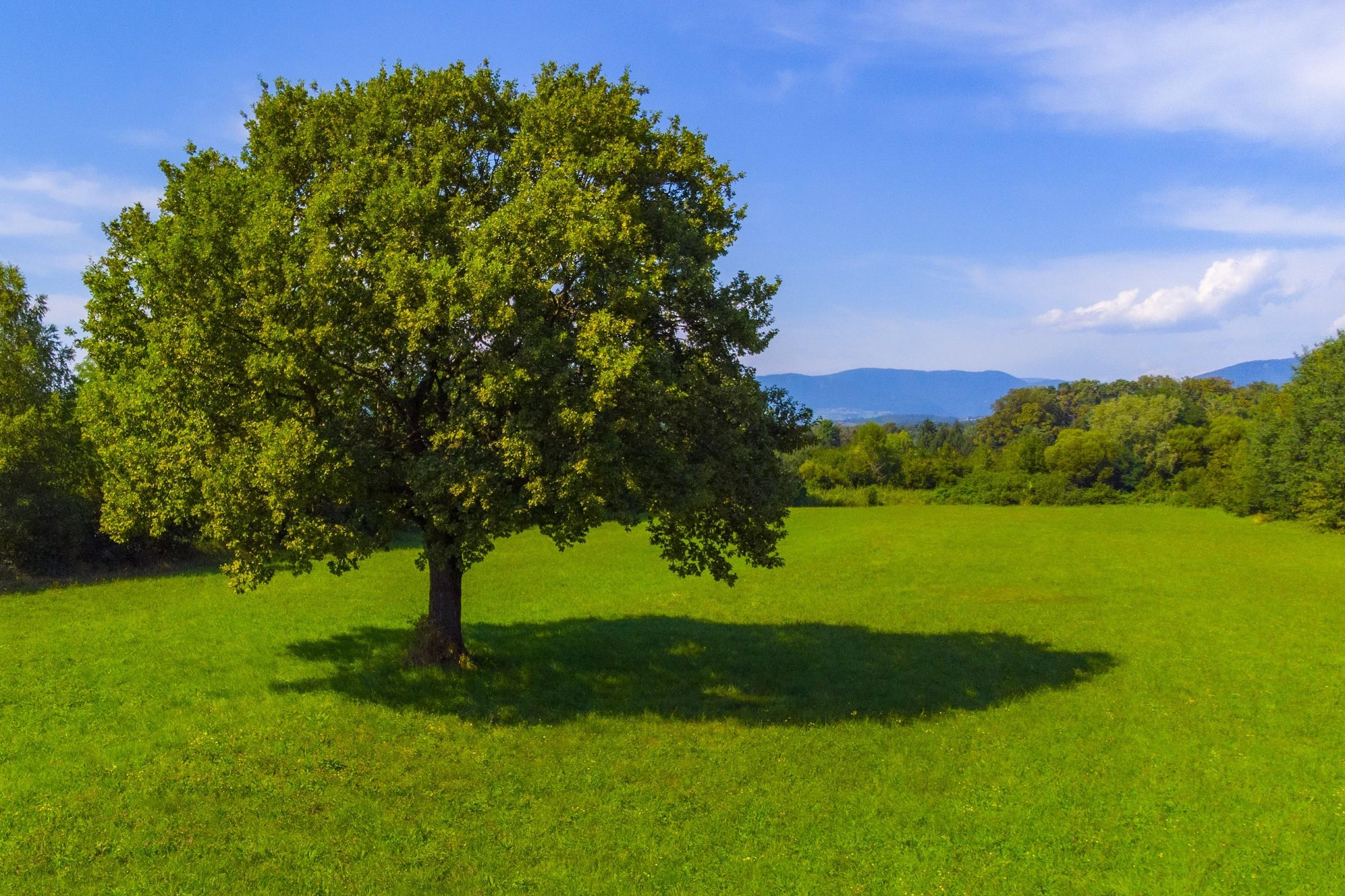 Mitja Korošec - Zeleno drevo